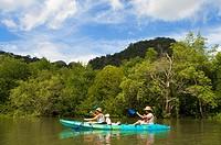 People enjoy kayak padding through the mangrove forest and sea cave. SEAKAYAK BOR THOR. Krabi. Thailand. Asia. The north part of Krabi province boasts...