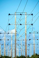 Florida, Miami, utility poles, Florida Power & Light, FPL, from Turkey Point Nuclear Generating Station,