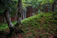 Natural Park Collados del Ason. Cantabria. Spain. Europe.