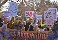 demonstration, New Mexico, to release more wolves in the wild, to benefit the gene pool.
