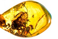 Amber with embedded insect.