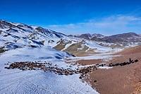Mongolia, Bayan-Ulgii province, winter transhumance of the Kazakh nomads.