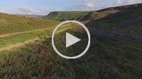 Fryup Dale ancient road maker standing stone with flowering heather - North Yorkshire Moor National Park, England