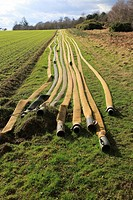 Long lines of irrigation hose pipes laid out on the ground, Shottisham, Suffolk, England, UK