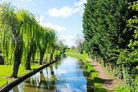 Willow trees next to Trent and Mersey canal in Cheshire UK