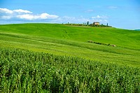 Countryside landscape around Pienza Tuscany Italy.