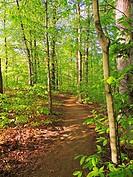 A hiking trail cuts through the new foliage of spring, Pennsylvania, USA.