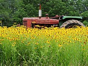 An old tractor comes to rest in a field of flowers, Pennsylvania, USA.