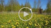 Young woman in field of dandelion