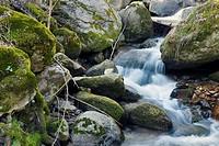 Solana Toro stream in Iruelas Valley. Avila. Castilla Leon. Spain. Europe.