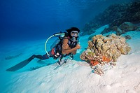 Male scuba diver look on litle coral reef on sandy bottom, Indian Ocean, Maldives.