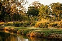 Pool, Mana Pool National Park. Zimbabwe.