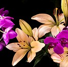 A low key image of yellow lilies and purple orchids shot against a black background.