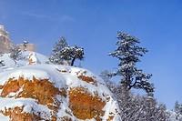 Fresh snow on the hoodoos and pines, Bryce Canyon National Park, Utah, USA.