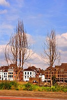 Two trees without leaves on the banks of the Maas River in Maastricht. Part of the old city wall and the Ceramique neighbourhood are seen in the backg...
