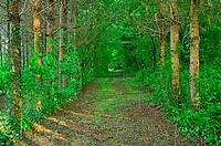 forest beside Lac des Graoussettes, Lot-et-Garonne Department, Aquitaine, France.