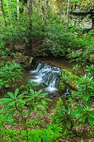 Waterfalls on Rhododendron Creek in Greenbrier, Great Smoky Mountains National Park ,TN.