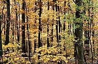 Trees in fall. Shenandoah National Park, Virginia, USA