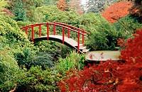 Red Moon Bridge among rhododendrons and Japanese maple. Kubota, Seattle. Washington. USA