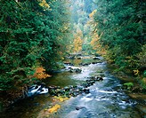 North Fork of Smith River, Siuslaw National Forest, Oregon, USA