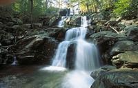 Dark Hollow Falls. Shenandoah National Park. Virginia. USA
