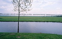 Irrigation canal with grassy banks lined with trees on far bank, single tree on near bank, Elburg, the Netherlands