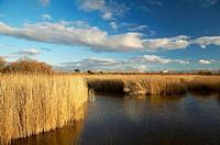 Tablas de Daimiel National Park in Ciudad Real province. Castilla-La Mancha, Spain