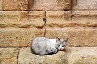 Stray cat. Molinos.Teruel. Aragón. Spain.