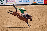 Cowboy riding bucking horse in a rodeo arena as the horse kicks out its rear legs. California Salinas Rodeo in Salinas, California.