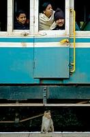 Curious monkey inspecting the Nilgiri Mountain Railway on a stop between Coonoor and Mettupalayam. India, Tamil Nadu 2005.  - Info: The Nilgiri Mounta...
