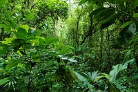 Rain forest protected area, close to Arenal Volcano National Park. Costa Rica. Central America