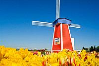 Windmill at Wooden Shoe Tulip Farm - Willamette Valley, Oregon