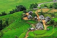 Rice terraces, Lao Cai, Vietnam
