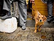 Walking the dog, Paris, France