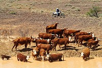 Williams cattle company, Nilpinna, South Australia, Australia