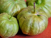 organic tomatillos from a CSA Community Supported Agriculture © Paula Borchardt - All rights reserved