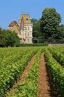 Vineyard and castle of Aloxe-Corton, Cotes d´Or, France