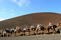 Camel tour at Timanfaya National Park, Lanzarote. Canary islands, Spain