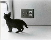 Black kitten on kitchen counter, next to light switch.