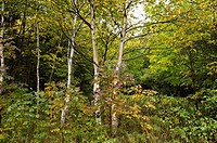 Trees, Scenic View near North Aspy River, Cape Breton Highlands National Park, Cape Breton Island, Nova Scotia, Canada