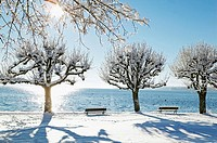 Tree covered with snow at Lake Starnberg