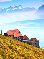 terrasse de lavaux,rivaz,vaud,suisse