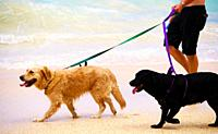 Two dogs on leashes at beach