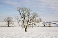 Trees in snowy landscape near Lochmaben, Dumfries and Galloway, Scotland
