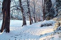 Winter in St  Anne´s Park, Dublin, Ireland