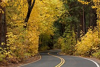 A road through a forest with golden autumn leaves
