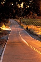 Road at sunset through vineyards near Plymouth, Shenandoah Valley, Amador County, California