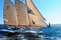France, Var 83, Saint-Tropez, Les Voiles de Saint-Tropez meet every year in late September of beautiful classic yachts competing in regattas superb
