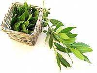 Bay leaves,
