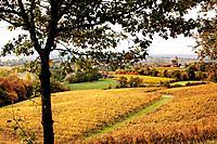 Fields of grain, Samazan, Gers, Midi Pyrenees, France.